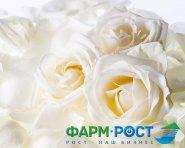 Коллектив компании «Фарм-РОСТ» искренне поздравляет с праздником 8-го Марта!