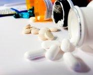 Страна без тендеров: фармкомпании не бросили пациентов на произвол и поставляют лекарства бесплатно