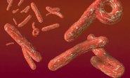 Охота на Эболу